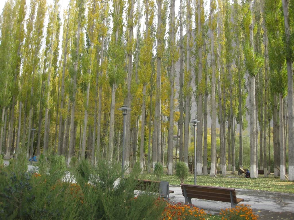 Image result for binsey poplars